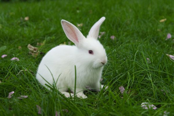 little white bunny sitting in green grass